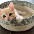 子猫が可愛すぎる!見ているだけで幸せになれる画像まとめ