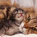 猫が母猫になるまでと子育てについて