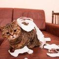 猫が『家を荒らしてしまう』ときに考えられること4つと対策