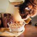 猫の『食物アレルギー』を誘発しやすい原材料3つ