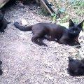 【母親はつらいよ】黒猫ママさん育児奮闘記♪