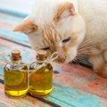 猫にオリーブオイルを与えても大丈夫?効果と正しい飲ませ方