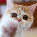 ニャンフェスの概要と参加方法│猫好きが集う雑貨イベント