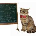 猫が教えてくれる14の大事なこと
