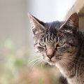 猫がイラっとする5つの飼い主の行動