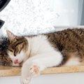猫のストレスがたまった時に見せる行動と解消法