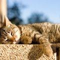 猫からいい匂いがする2つの理由と体の部位