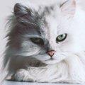 ペルシャ猫の値段を知りたい!平均価格や個体差による違いについて