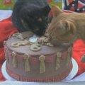 憧れの巨大ケーキで祝う猫たちのクリスマス!