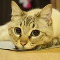 【Laylaの個別リーディング】☆静月ちゃん☆カードから読み解く飼い主さ…
