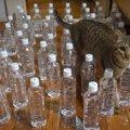 猫除けペットボトルで発覚した猫ちゃんの思わぬ特技!