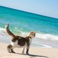 猫に有害な不凍液(エチレングリコール)の危険性と誤飲した時の症状…