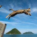 猫がジャンプに失敗するおもしろ動画5選!