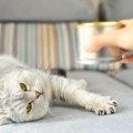 猫の缶詰の選び方とおすすめ商品5選