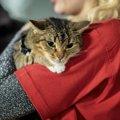 新型コロナウイルスが原因!ロンドンで猫の遺棄が多発