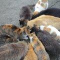 動物愛護法とは?猫に餌やりをするのは違反行為なのか