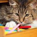 出しっぱなしにすると猫に危険な物4つ
