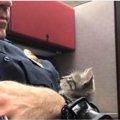 警察官がパトロール中に街灯の下で見つけた子猫