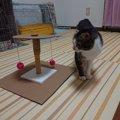 愛猫へ手作りおもちゃで愛情表現♡