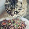 猫が餌を食べない理由とその対処法