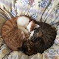 猫のお気に入りの寝床はみんな同じ?