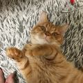 猫が『親友』と認めている人にだけする行動5つ