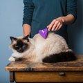 猫のブラッシングの正しいやり方とその効果