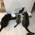 猫はオーガニックフードで健康を維持できる?