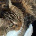 猫で暖を取るはずが…猫『に』暖を取られる!?共感の声続出!