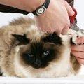 猫の爪切りって難しい?コツや注意点を教えます!