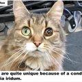虹彩異色症の猫は、家を見つけただけでなく仕事まで手に入れた!