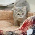 冬用猫ベッドの特徴と選び方とおすすめ商品6選