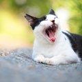 猫の「自由気まま」な性格の謎!