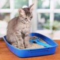 猫のおしっこが出ない原因と考えられる3つの病気
