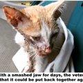 交通事故で顎を骨折した子猫を助けるも、安楽死をすすめられ...