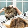 『飼い主を踏みつける』猫が考えていること4つ