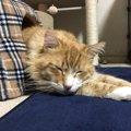 『猫が好きなこと』トップ5