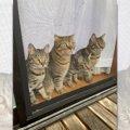 【悲報】眉ティント中に宅配便「ママ!眉毛~」視線で語る猫たち