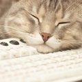猫に枕は必要?一緒に使う時の注意点と気持ち