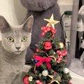 LAYLAの12猫占い【11/30~12/6】のあなたと猫ちゃんの運勢