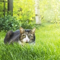 猫に忌避剤(きひざい)を使うとどうなる?その効果や持続時間について