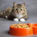 猫に必要なカロリーと餌の量について