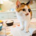 猫は納豆を食べても大丈夫!食べた時の健康効果や注意したい事