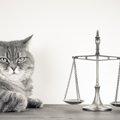 猫の大きさは?平均体重はどのくらい?