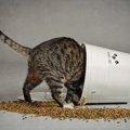 猫がおいしい!と思っている時の仕草や鳴き声