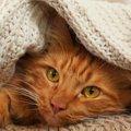 猫に『こたつ』を使う時の絶対NG行為3選!こんな環境だと怪我や病気につ…