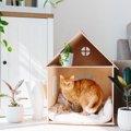 猫を『飼育禁止物件』で飼うと起こり得る最悪のシナリオ5つ