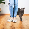 猫がついてくる心理とは?甘えん坊な猫の姿が浮き彫りに!!