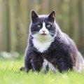 猫の食べ過ぎが分かる6つのチェックポイント