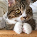 猫が両手でもみもみ!?たまらなく可愛いその行動のワケとは?